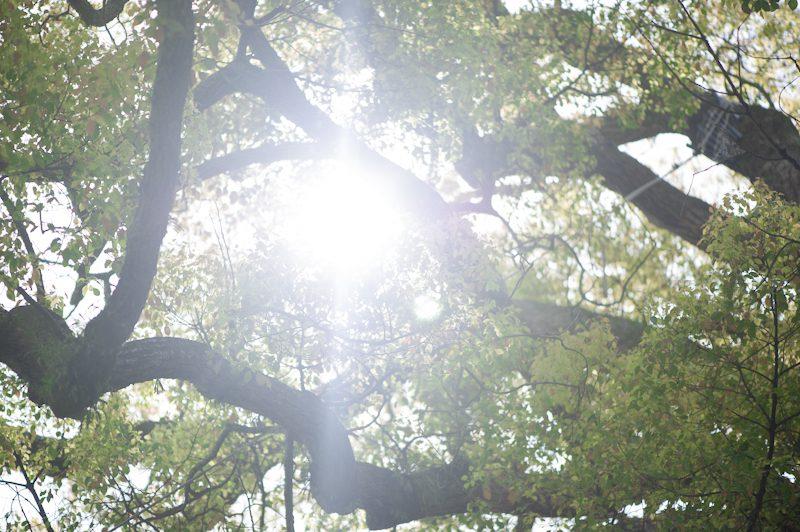 晴れた日の京都