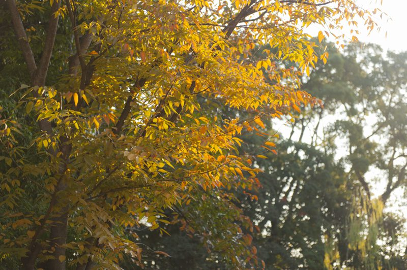 秋の日の朝