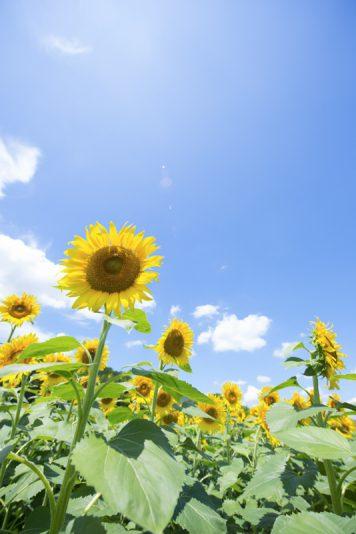 セミの鳴き声が響く真夏の日